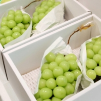 Shine Muscat seedless grapes developed in Japan. The government plans to submit a bill to the Diet implementing tougher restrictions on taking such brand-name agricultural products out of the country. | KYODO