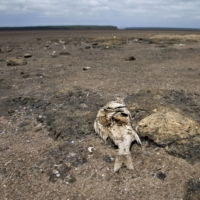 Africa is warming fast, and the most vulnerable are being hit hardest