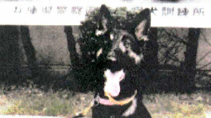 Runaway police dog found after search on Hyogo's Mount Nagusa