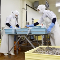 Employees of a seafood processing firm work at its facility in Ishinomaki, Miyagi Prefecture, in August 2019. | KYODO