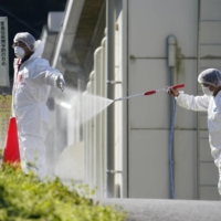 Culling of 330,000 chickens begins in Kagawa after bird flu confirmed