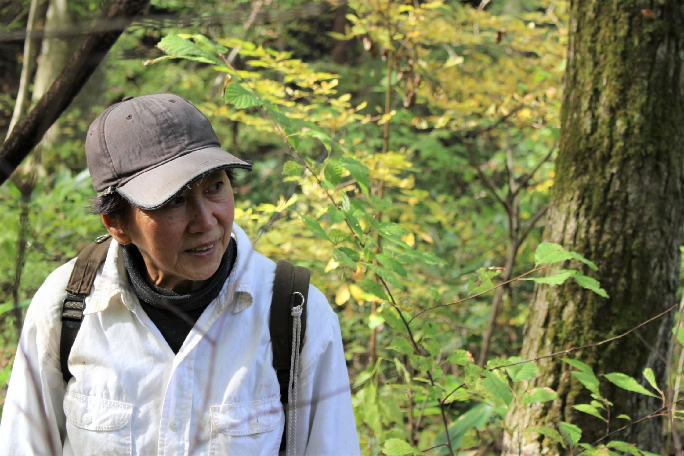 """Mushroom master: """"I have to keep ahead of all the 'rivals' who are also out here looking for mushrooms,"""" says Ikuko Sato. 
