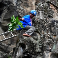 A gardener removes tree saplings from the exterior of the Angkor Wat temple in Siem Reap province, Cambodia.  | AFP-JIJI
