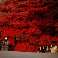 Women pose for photographs in front of maple leaves at a park in Seoul on Friday. | REUTERS