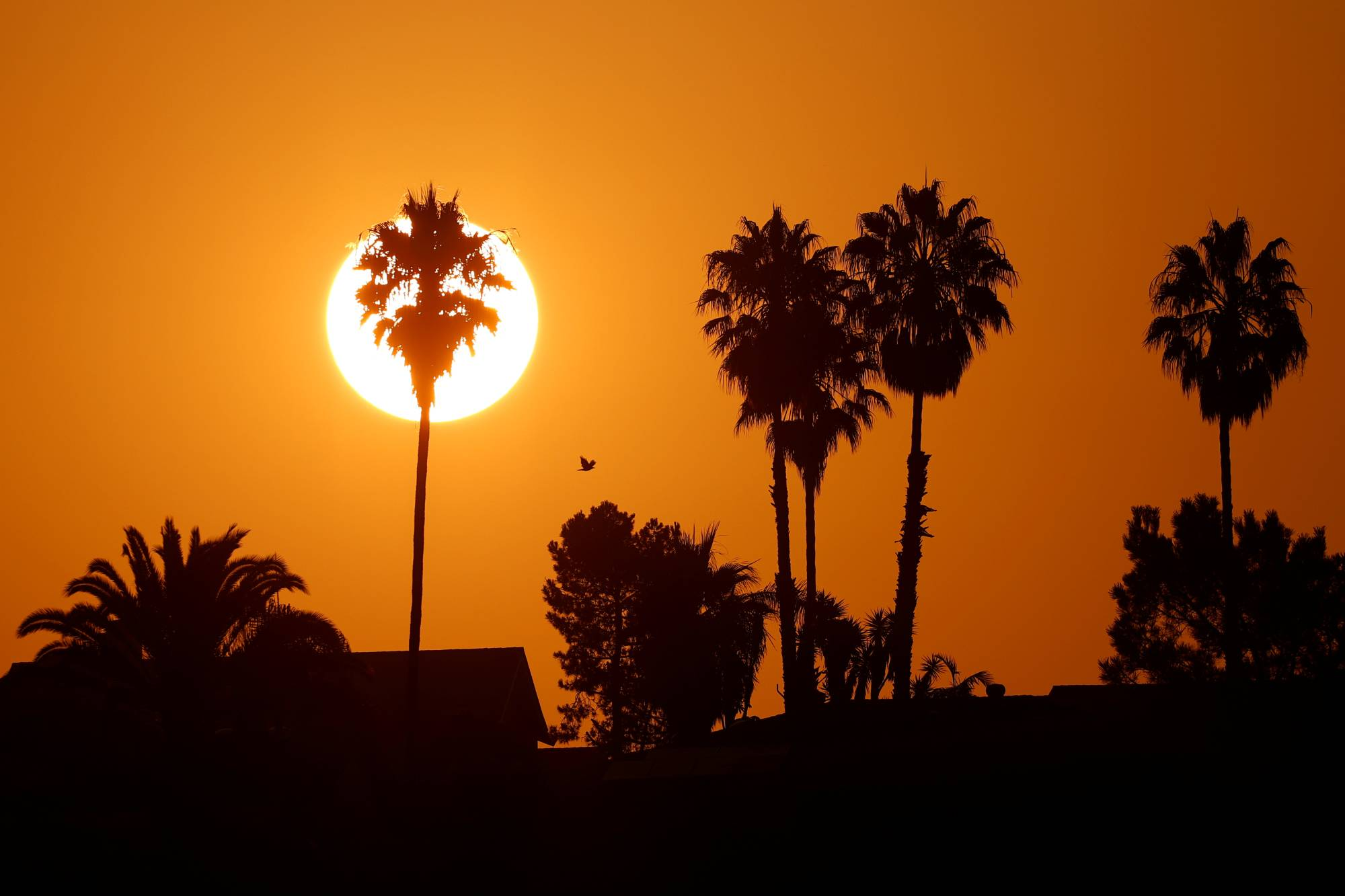 The sun rises amid a heat wave in Encinitas, California, in August.  | REUTERS