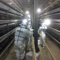 Self-Defense Forces personnel work on Friday inside a chicken farm in Mimasaka, Okayama Prefecture, hit by an outbreak of avian influenza. | OKAYAMA PREFECTURAL GOVERNMENT / VIA KYODO
