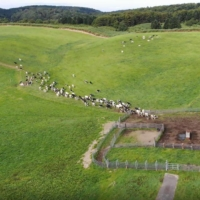 Drones are also used to herd cows. | NTT DOCOMO INC.