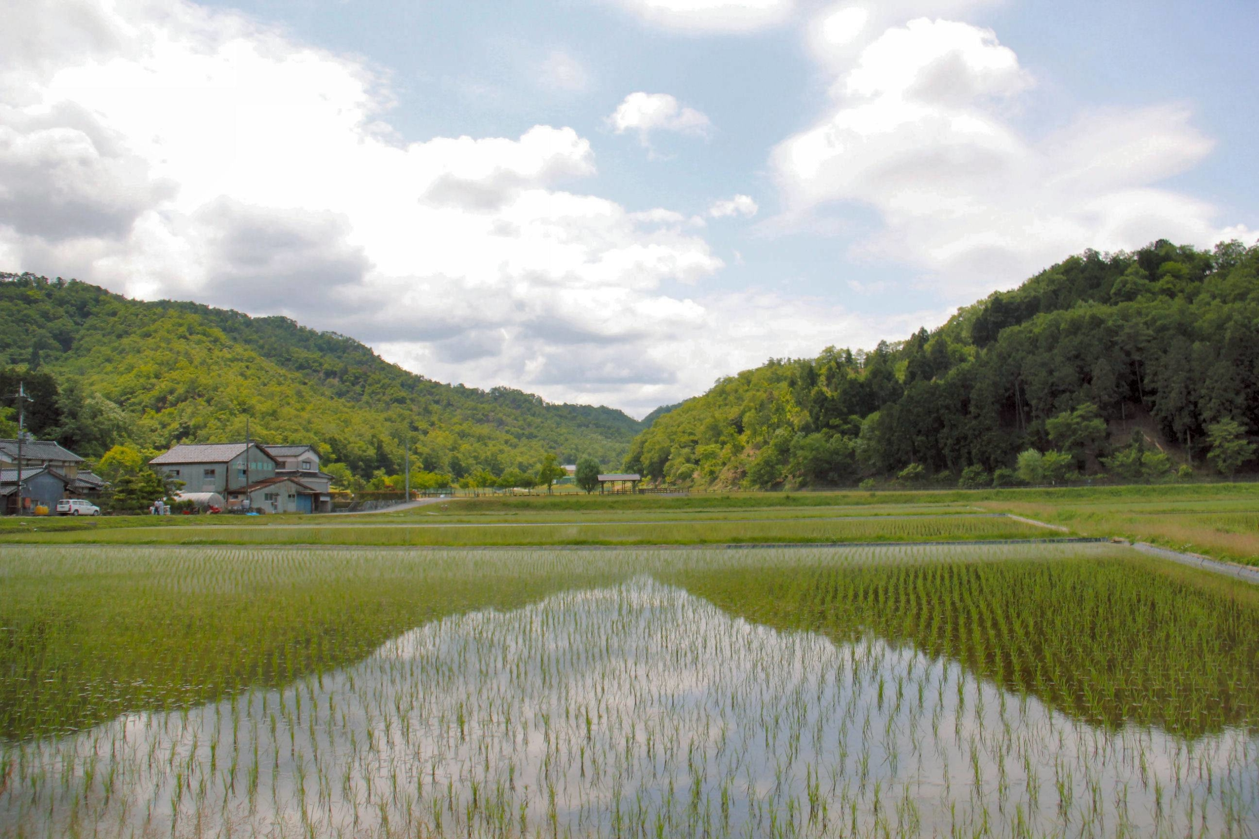 Wetlands and paddy fields are the Oritenal white stork's favorite feeding grounds. | TOYOOKA CITY