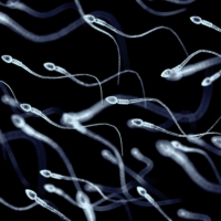 'DM if interested': Sperm donors in Japan operate in a gray zone