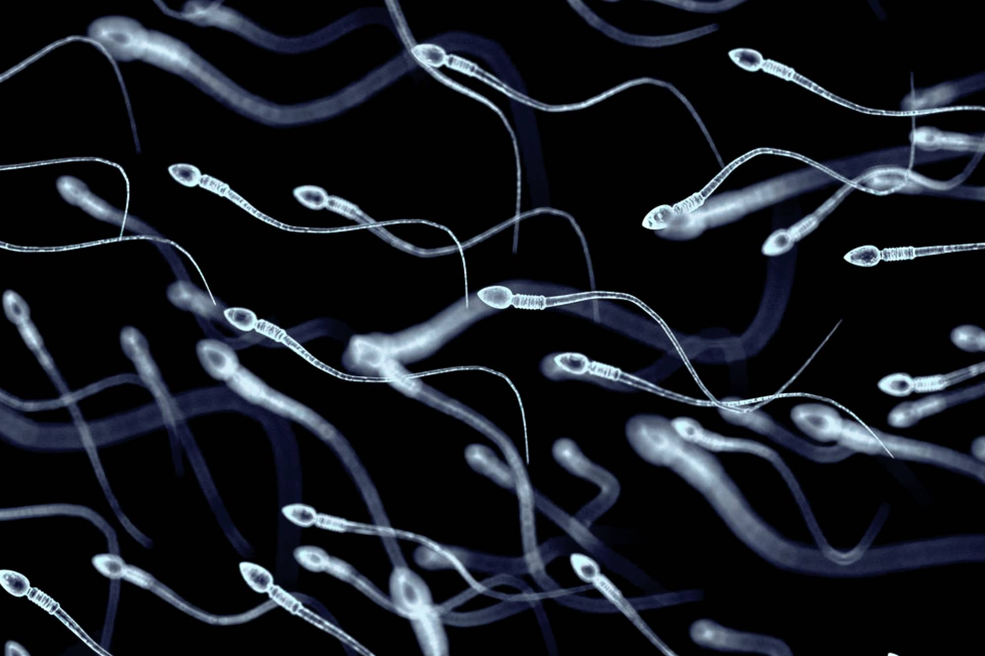 Men who tout themselves as sperm donors on the internet are using their virility for what they claim is a charitable cause to help women get pregnant. | GETTY IMAGES