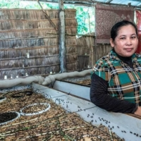 Some Cambodian farmers are turning substantial profit from breeding crickets for food and feed under the guidance of Ecologgie, a Japanese startup. | COURTESY OF ECOLOGGIE