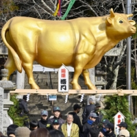 Statues of oxen have been erected at shrines around Japan to mark the start of the Year of the Ox in 2021. | KYODO