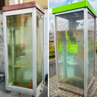 Nobuki Yamamoto said the goldfish-filled telephone box (left) erected in Yamatokoriyama, Nara Prefecture in 2014, was a copy of his own earlier artwork (right). | KYODO; NOBUKI YAMAMOTO / VIA KYODO