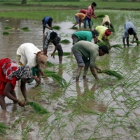 India is hoping to make inroads in data trading with an exchange for agricultural data, covering things such as the locations of fields, their size, soil health, farm details, crop insurance and fertilizer supplies.  | REUTERS