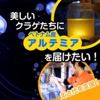 Kamo Aquarium is promoting a crowdfunding campaign to feed its record-setting collection of jellyfish. | KAMO AQUARIUM / VIA KYODO