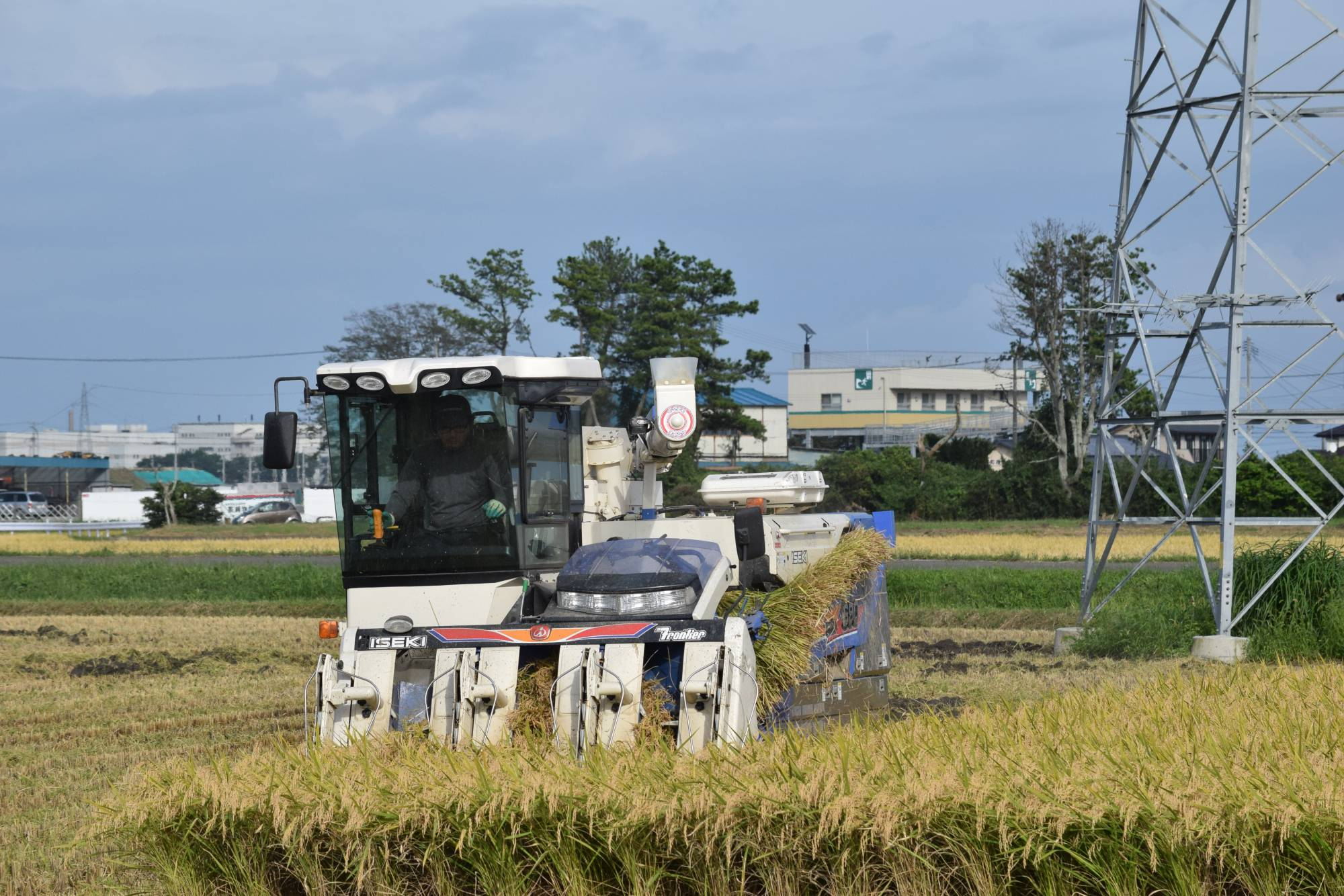 Farmers at a local agricultural cooperative in Sendai's Shinhama district harvest rice in September. | KAHOKU SHIMPO