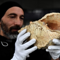Guillaume Fleury, who works at the Museum of Natural History, shows a Charonia lampas trumpet shell, which was first found in 1931 in an archaeological dig at the mouth of the Marsoulas Cave, at the museum in Toulouse. | AFP-JIJI