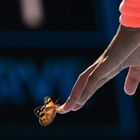 Naomi Osaka attempts to carry a butterfly off the court during her Australian Open third-round match on Friday. | AFP-JIJI