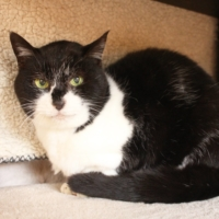 Chira is a chill cat looking for a place to spend her golden years