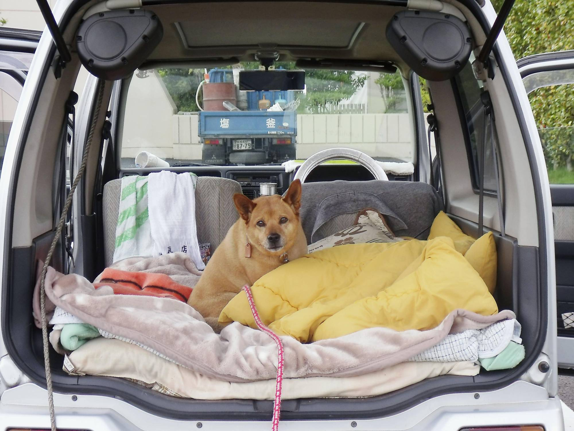 A dog shelters in a car with its owner in Miyagi Prefecture after they evacuated home following the March 2011 quake and tsunami disaster. | COURTESY OF THE SENDAI CITY GOVERNMENT / VIA KYODO