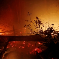 Trees burn during a forest fire in Kapuas regency near Palangka Raya, Central Kalimantan province, Indonesia, in October 2019. | REUTERS