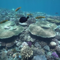 To protect the endangered coral reefs around Okinawa, swimmers and divers are advised to use coral-friendly skin products.