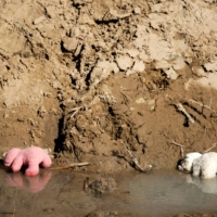 Teddy bears belonging to migrant girls are seen in the Rio Bravo river on Feb. 5. | REUTERS