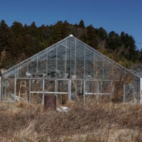 A slow return to agriculture in Fukushima's evacuated areas