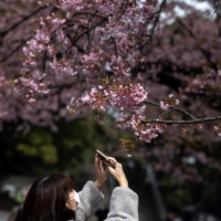A woman takes pictures of cherry blossoms at Ueno park in Tokyo on Friday. | AFP-JIJI