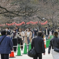 Tokyo's Ueno Park has set up dividers so people can view its cherry blossoms while walking. | KYODO