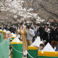 People take photos of cherry blossoms at Tokyo's Ueno Park on Saturday, ahead of the lifting of the coronavirus state of emergency. | KYODO