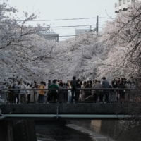 People take photographs of cherry blossom trees at the Meguro River in Tokyo on Saturday. | BLOOMBERG