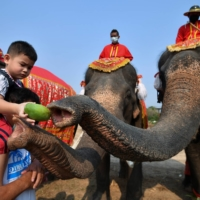 A child feeds an elephant during Thailand's National Elephant Day celebration in Ayutthaya | REUTERS