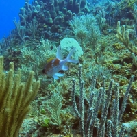 A coral colony on the coast of Havana | REUTERS