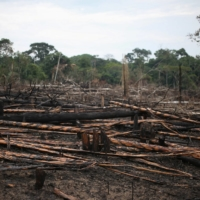 Charred logs on a stretch of the Yari plains | REUTERS