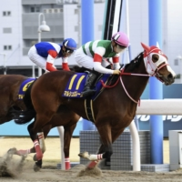 Online betting amid pandemic a boon for horse racing in Japan