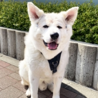 Your royal reward: Harry the dog is a big dog looking for the respect he deserves.  | YOUKA NAGASE