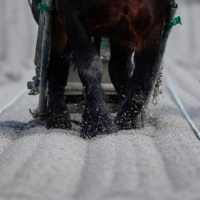 A horse competes during a 'ban'ei' race last year at a track in Obihiro, Hokkaido. | REUTERS