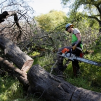 Private firefighter Sean Pafford cuts dead tree limbs as part of a fire prevention project at a park outside Sacramento, California, on April 5. | REUTERS