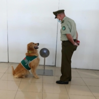 Virus-sniffing dogs could shorten test lines at airports, U.K. study finds