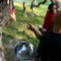 Chef Bun Lai and friends collect cicadas to cook with at Fort Totten Park in Washington, on Sunday.    AFP-JIJI
