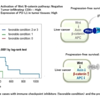 factors related to effective cases with immune checkpoint inhibitors and the progression free survival