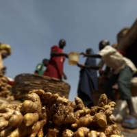Freshly washed ginger bulbs at a market in Kaduna | REUTERS