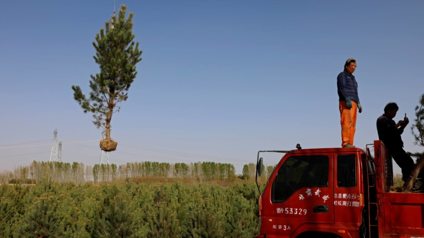 Farmers in China push back the desert — one tree at a time