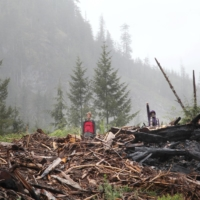 Protesters stand on debris of trees that were cut down near Port Renfrew, British Columbia, in May.   REUTERS