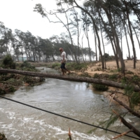 A man crosses a canal on a fallen tree after Cyclone Yaas hit Digha. | REUTERS