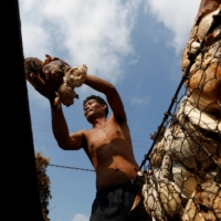 A man collects rubber from a home near a rubber farm in Tbong Khmum province, Cambodia.  | REUTERS