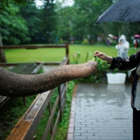 A tourist feeds fruit to an elephant at the Wild Elephant Valley. | REUTERS