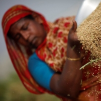 A worker dries rice at a farm in Dhaka.   | REUTERS