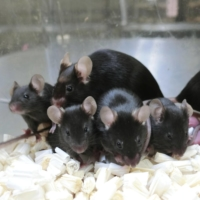 'Noah's Ark' in space? Japanese researchers successfully preserve genes of mice on ISS